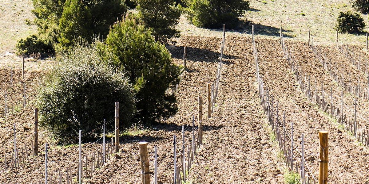Château Argenties | Les Vignes
